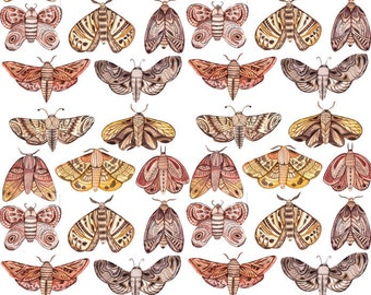 Moths and Moths - Ceramic Decals- Enamel Decal - Fusible Decal - Glass Fusing Decal ~ Waterslide Decal - 10309