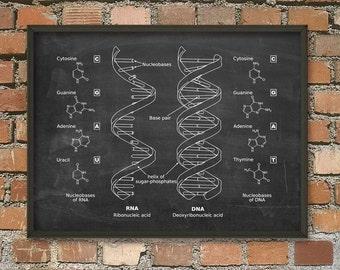 DNA and RNA Wall Art Poster - Biology Student Art Poster - Genetics Art Print - Dorm Decor - Student Gift Idea