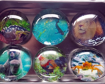 Handmade Glass Marble Magnets - original photographs of Animals