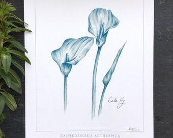 Calla Lily Botanical print