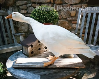 Taxidermy White Embden Goose