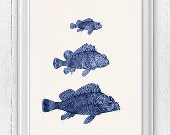 Blue Rock Fishes. Sea life print- Vintage  fishes art,  Ocean naturalist illustration, Sea shore house decor fish SAS303