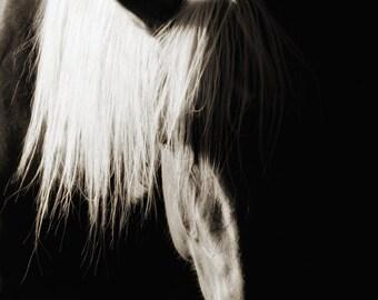 Horse Photography Sepia Horse Photograph