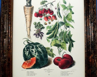 Vegetable Art No.30 from 1879 Art Print on Ivory Cotton Paper
