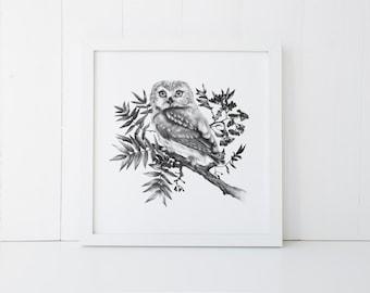 Saw Whet Owl Print 12x12 Fine Art Archival Print
