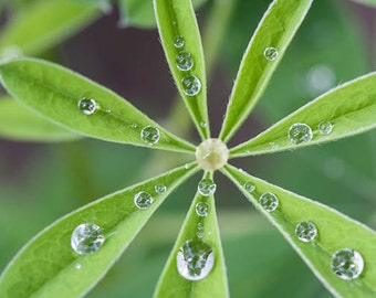 "Nature Photography, ""Raindrops II"",  Macro Photograpy, Arizona Photography, Customizable Sizes Upon Request"