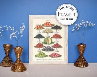 Vintage illustration of various fruits - framed fine art print, botanical art, kitchen decor 8x10, 11x14, FREE SHIPPING 241