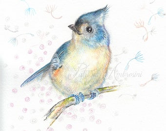 Original 7x9 handpainted Watercolor Tufted Titmouse6. NOT A PRINT ..Original Painting blue