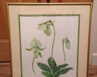 """GREEN ORCHID """"PAPHIOPEDILUM"""""""