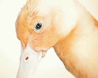 duckling photo, nursery art,  childs room decor, nursery decor, sepia art, duck photo, baby animal print, photo, baby animal photo