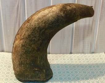 Buffalo Horn ~ Unpolished ~ Taxidermy ~ Trophy ~ Rustic Decor ~ Ranch Decor ~ Buffalo Collector