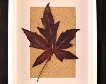 Autumn leaves mounted on Knapweed paper