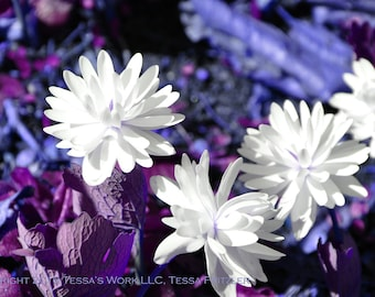 White Flowers in Wonderland 8x10 glossy print