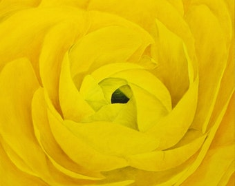 "Ranunculus Oil Painting, Flower Painting, Original Oil Painting, Flower - Yellow Ranunculus (18"" x 18"" One of a Series)"