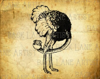 Cuite Ostrich Clipart Illustration Instant Download PNG JPG Digi Line Art Image Drawing L167