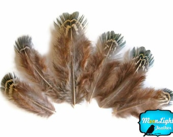 Pheasant Plumage, 1/4 lbs - Green Almonds Ringneck Pheasant Wholesale Feathers (bulk) : 3603