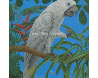 Kauai Cockatoo, Small Giclee Print