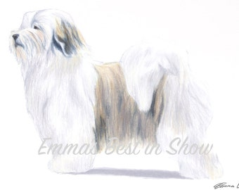 Havanese Dog - Archival Fine Art Print - AKC Best in Show Champion - Breed Standard - Toy Group - Original Art Print