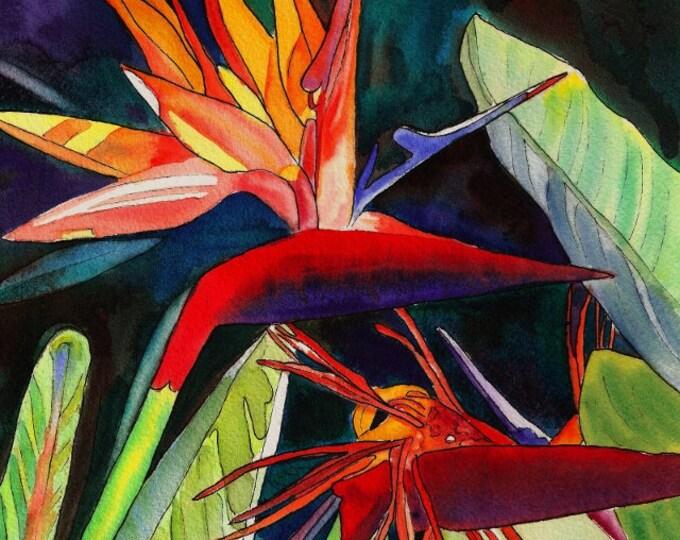Bird of Paradise 8x10 print from Kauai Hawaii  Kauai Garden of Paradise red blue orange