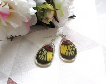 Butterfly earrings, Resin butterfly,  Resin Earrings, Yellow, red, Black and red earrings, butterfly wings, Taxidermy, Taxidermy jewellry