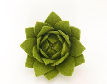 Artichoke Succulent