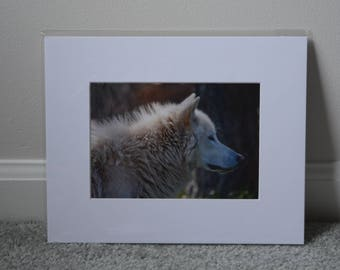Wolf Print - White