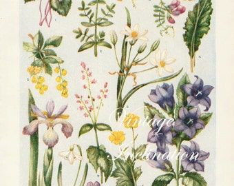 1933 Antique flower art print, Flowers of the Woodlands 4907,  floral bookplate prints, botanical flower art illustration