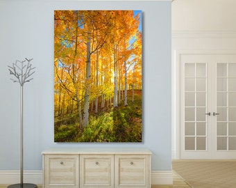 Autumn Photography, Golden Aspens Trees, Woodland, Utah Fall Color Print, Fine Art Canvas, Golden Light, Yellow Blue Home Decor, Large Print