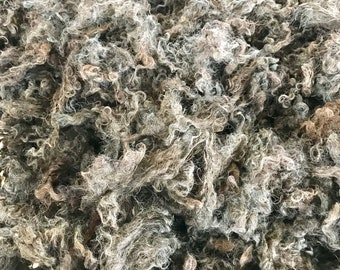 Raw Natural-Colored/English Blue/Gray Leicester Longwool Fleece (Cornell)