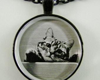 NEUGIERIG TABBY Halskette--Spielerische Tabby Check-out die Szene für Katzenliebhaber