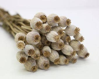 Dried flowers etsy dried poppy bunch natural dried flowers poppy whole flower bouquet mightylinksfo Image collections