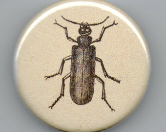 Spanish Fly 1.25 inch BUTTON Vintage Image