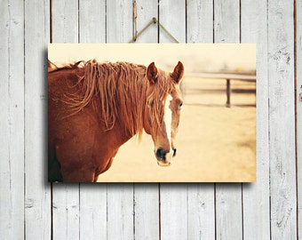 """Sunny - 16x24"""" canvas print - Horse decor - Horse art - Horse photography - Chestnut horse photography - Horse canvas - Red and yellow decor"""