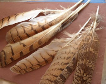"""feathers """"Eagles"""" variety of bird, fine quality natural 2 mm."""