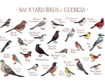 Georgia Backyard Birds Field Guide Art Print / Watercolor Painting / Wall Art / Nature Print / Bird Poster