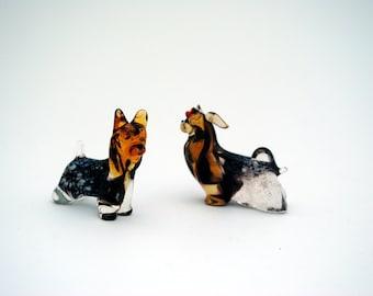 e31-10 Yorkshire Terrier