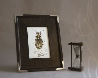 "Martinefa's Original watercolor and Ink, presented in a frame - "" Insect #1"""