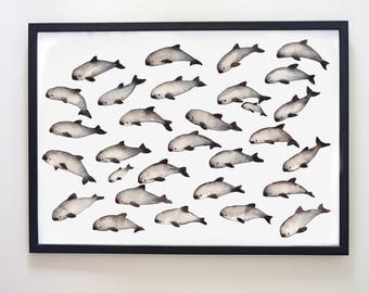 Save the Vaquita. Water colour Art Print.  25% to charity Dolphin Porpoise Sea Art
