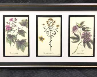 Summer Wildflowers Framed Botanical Print Set