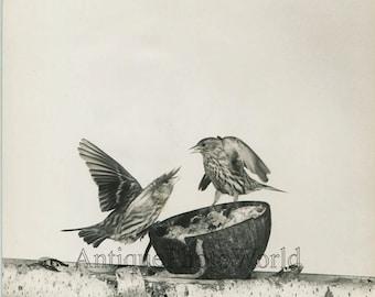 Birds by feeder vintage art photo