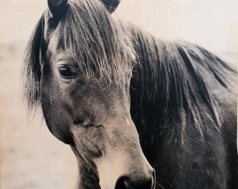 Horse Photography, 'Don't Be Shy' Limited Edition Fine Art Photography, Image Transfer on Wood Panel by Patrick Lajoie, black and white