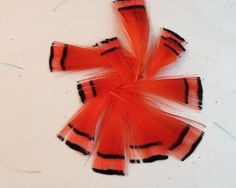 orange Federn Goldfasan Pelerine gefärbt 10pk