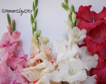 Pretty Gladiolus