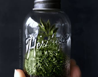 Mini Mason Jar Terrarium with Live Moss