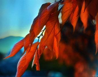 "Nature Photography - orange autumn photography, firey orange autumn leaves dangling against a blue sky - autumn art - ""To Autumn"""