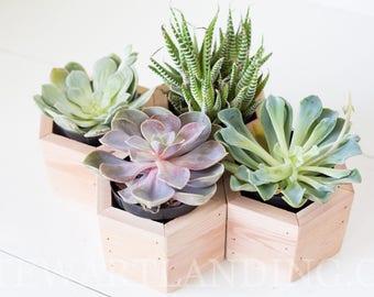 Succulent Planter Box Set of 4 | Geometric Succulent Hexagon Planter | Wood Flower Box | Rustic Wedding Centerpiece | Wedding Table Decor