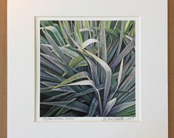 Silver Green Yucca Matted Art Print