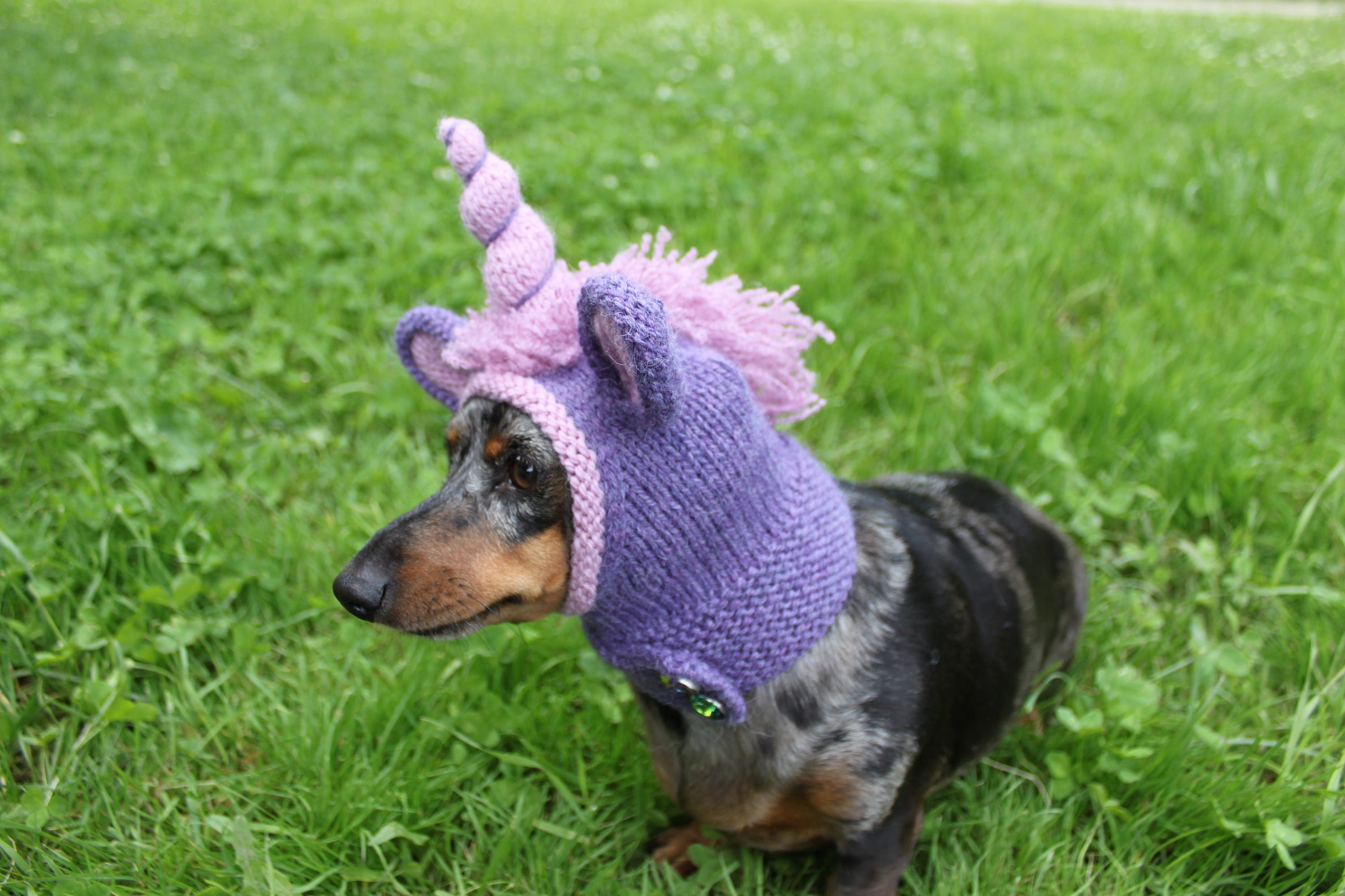 Knitting pattern dachshund unicorn hood dog hat dogs pet zoom bankloansurffo Gallery
