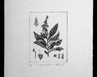 Digitalis (Foxglove) Original Fine Art Etching Print (Editioned Botanical Illustration)