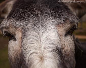Donkey Photograph, Rustic Home Decor, Farm Animal Photo, Animal Photography, Farmhouse Decor, Instant Digital Download